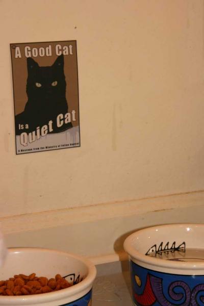 mox-quiet-cat-1.jpg