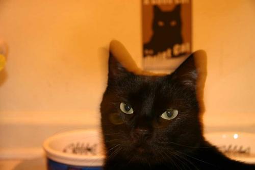 mox-quiet-cat-2.jpg