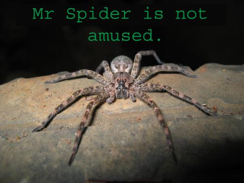 mr-spider-is-not-amused.jpg