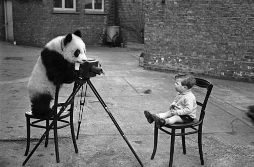 panda-photographer.jpg