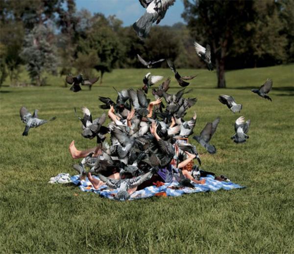 pigeon-attack.jpg