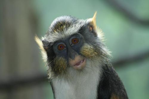 scary-monkey.jpg