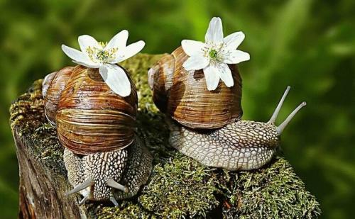snail-flower-power.jpg