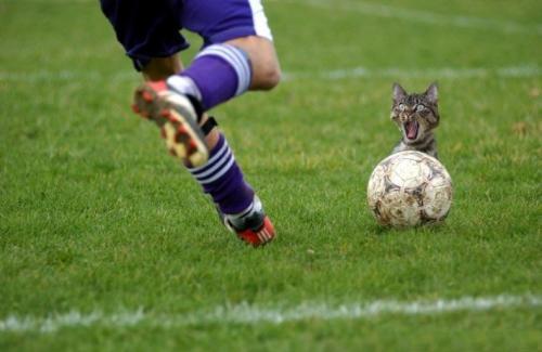 soccer-cat.jpg