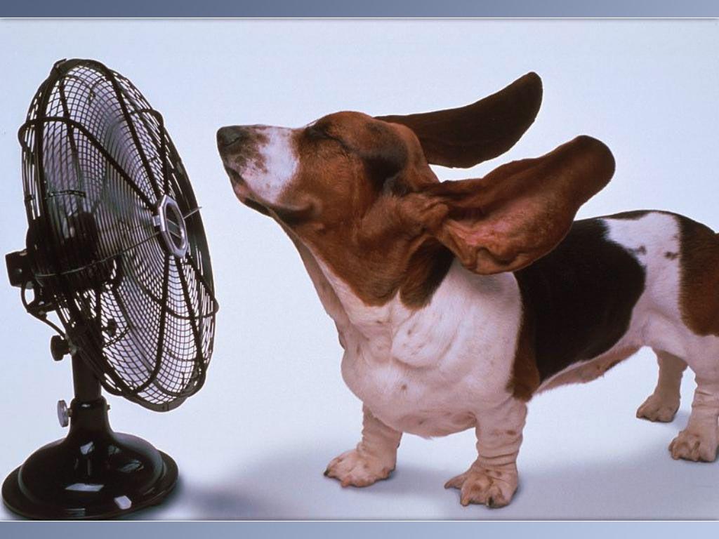 Dog With Fan : Floppy eared dog in front of fan myconfinedspace
