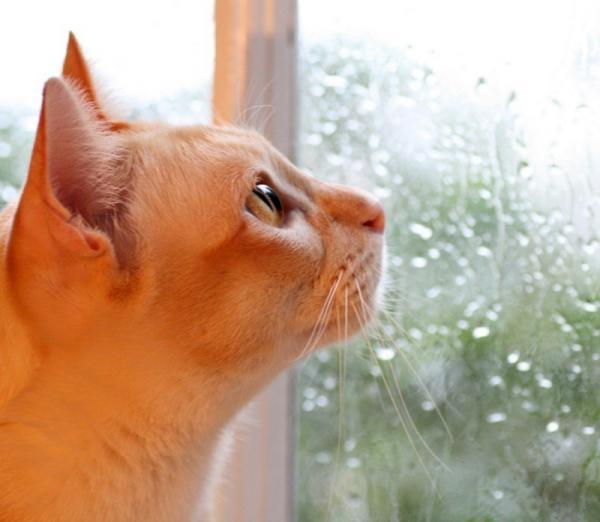 attentive-kitty.jpg