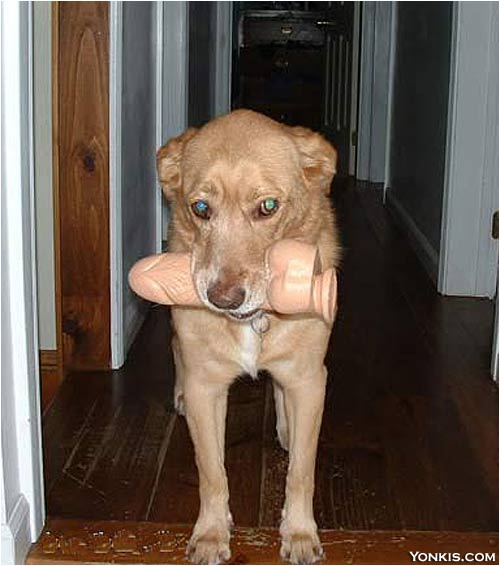 doggy vibrator Dildo Doggy Toy XXX wtf Humor