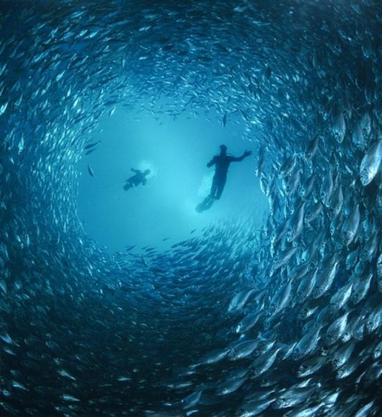 fish-cyclone.jpg