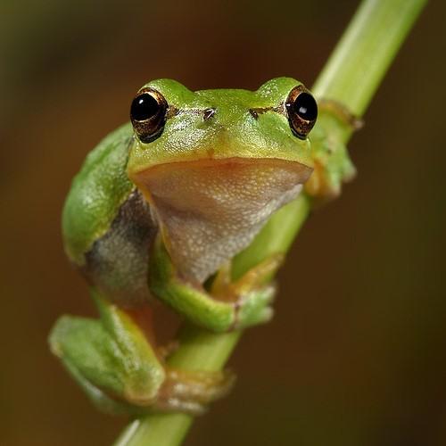 funny-frog.jpg
