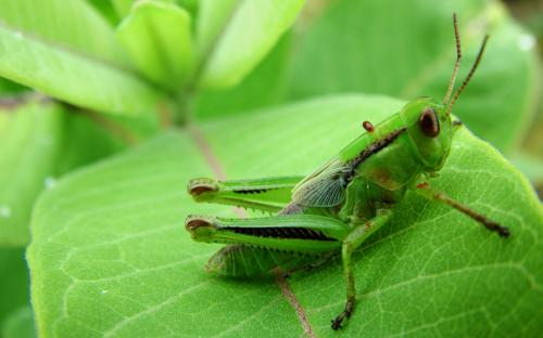 grass-hopper-wallpaper-very-green.jpg