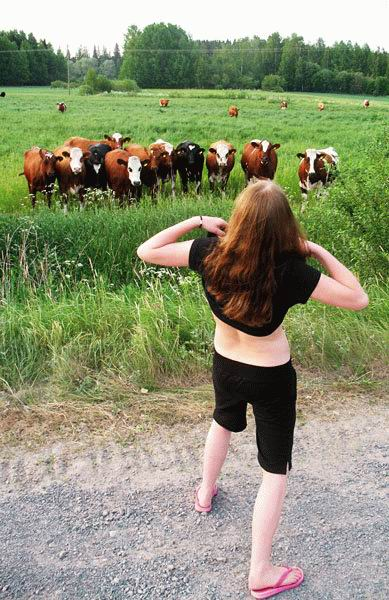 lucky-cows.jpg