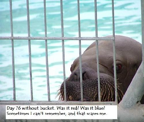 sadwalrus Poor Walrus Humor Forum Fodder Cute As Hell Animals