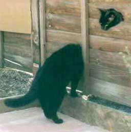 snakecat Oh hi thur! wtf