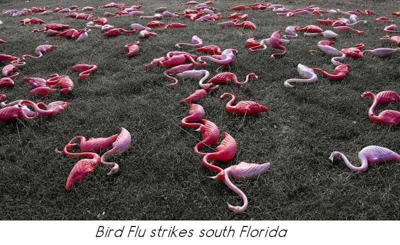 birdfluhitsflorida.jpg