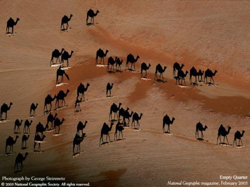 camel-shadows.jpg