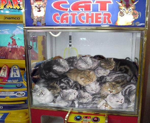 cat-catcher.jpg
