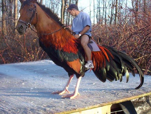 Horsecock