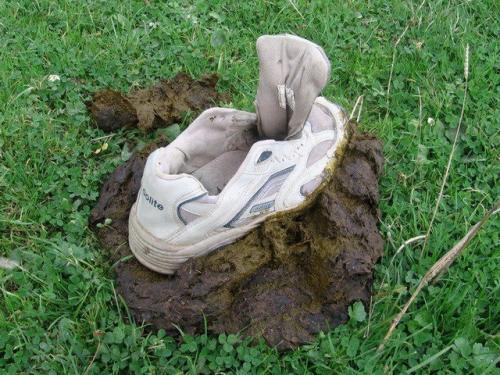 poo-shoe.jpg