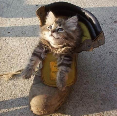 shoe cat Cute Cat In A Boot Humor Cute As Hell Animals