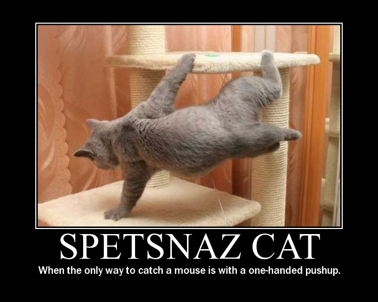 Spetsnaz Cat motavational