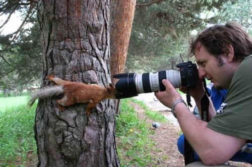 squirrel-photographer.jpg