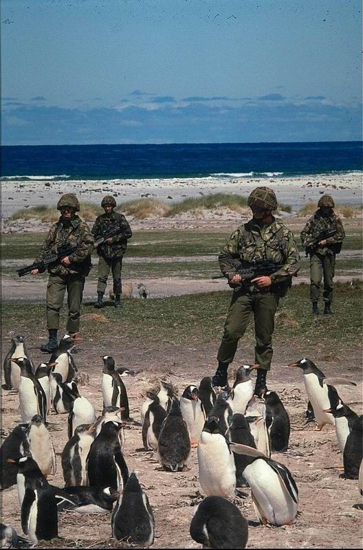 army-penguin-watchers.jpg