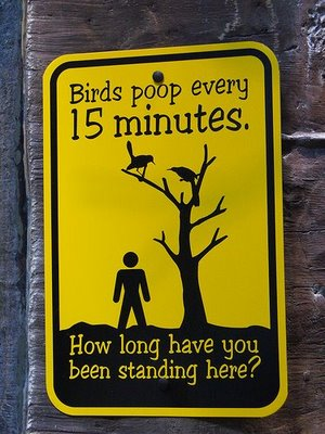 bird poop Bird Poop Sign Humor