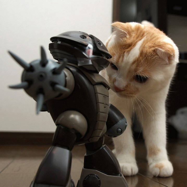 cat-vs-mech.jpg