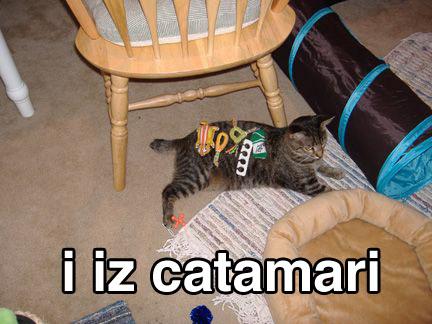 catamari.jpg