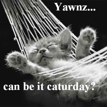 caturday yet Can be it caturday? Humor Forum Fodder Cute As Hell Animals