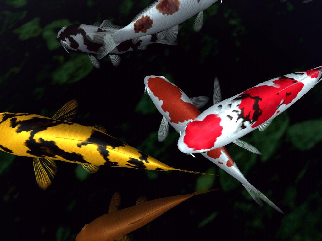 fish-wallpaper.jpg