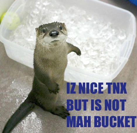 otter-no-bucket.jpg