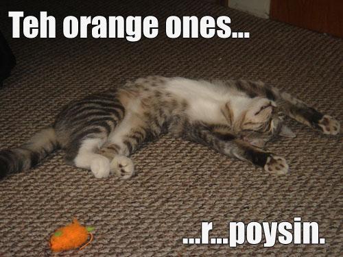 poysin-mouses.jpg
