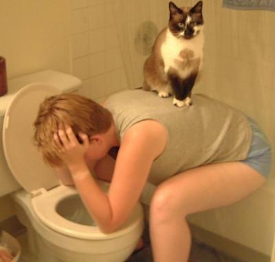 puke-cat.jpg