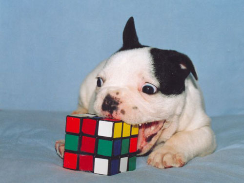 Rubiks Dog