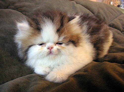 dem be some good catnip….