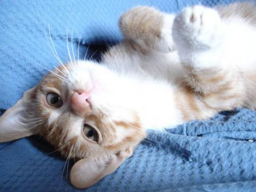 upsidedown cat.thumbnail Upside Down Cat Cute As Hell Animals
