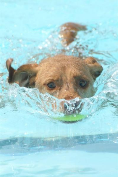 water-dog.jpg