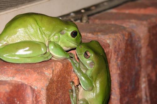 frog-kiss.jpg