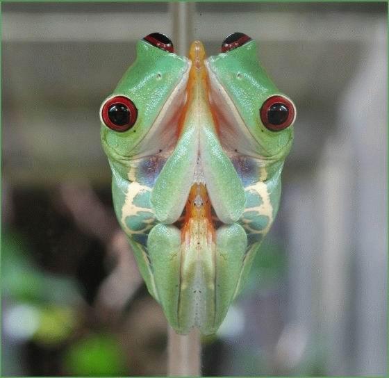 mirror-frog.jpg