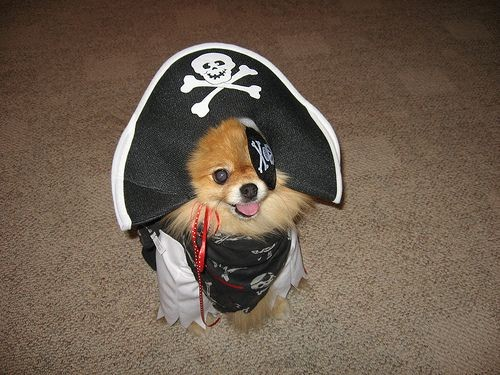 pirate dog Pirate Dog Humor Cute As Hell Animals