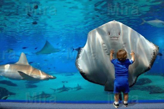 5d Aquarium Live Wallpaper 1314070 furthermore Sting Ray Vs Kid in addition 7483 National Marine Aquarium further Basics Of Standing Seam Metal Roofs 1821949 besides Axolotl Tank. on 15 cool fish aquariums