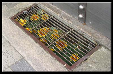 subway flowers Drain Ditch Flowers wtf
