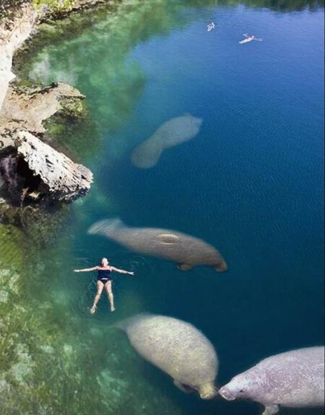 swim-with-the-manatees.jpg