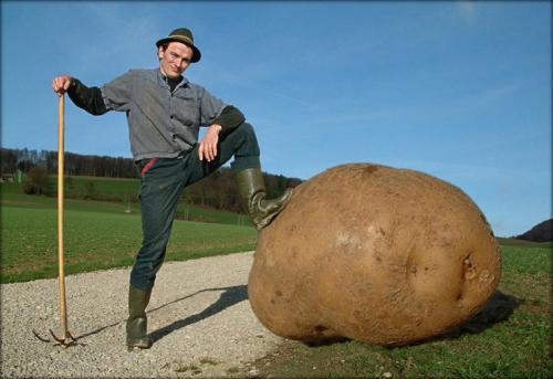 big-potato.jpg