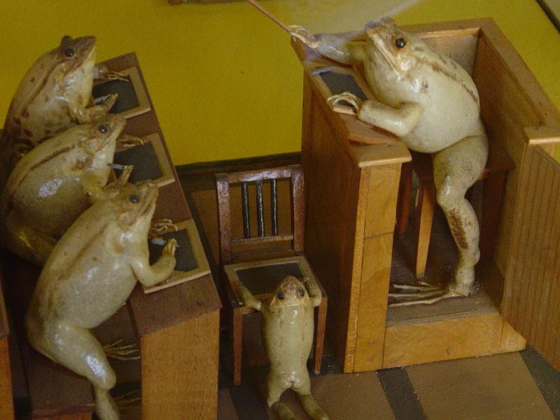 dead frogs in school