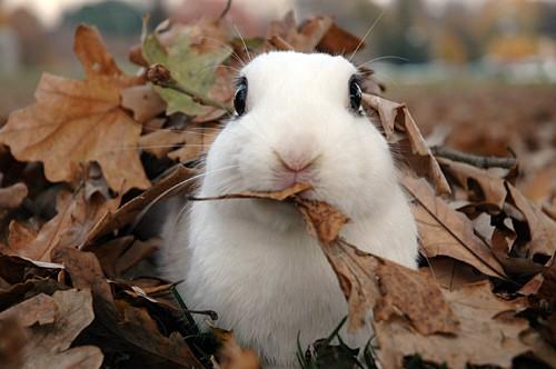 Fall Bunny