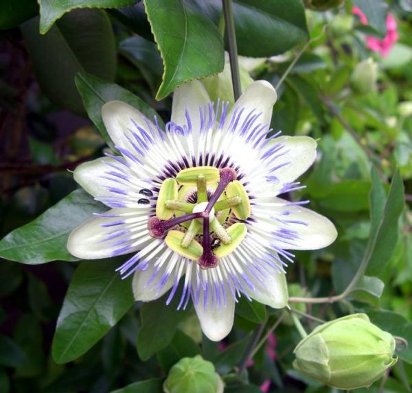 flower-purple.jpg