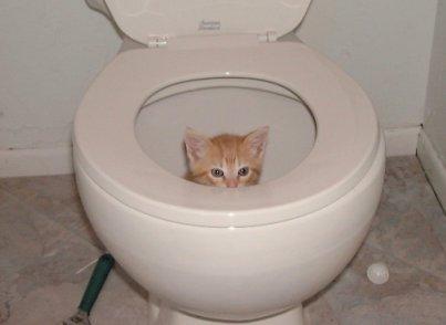 http://www.myconfinedspace.com/wp-content/uploads/2007/10/kittytoilet.jpg