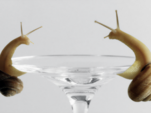 snail martini.thumbnail Snail Martini wtf Wallpaper Nature Cute As Hell Animals Alcohol